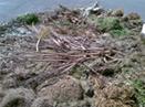 Planta_Biomasa_entrada